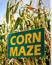 Corn-Maze-Halloween-In-Orlando