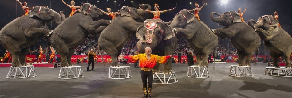 The Circus is Coming to Orlando!