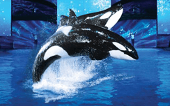 Shamu New Years Eve