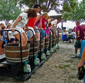 Lakeridge Winery Free Things to do in Orlando in August