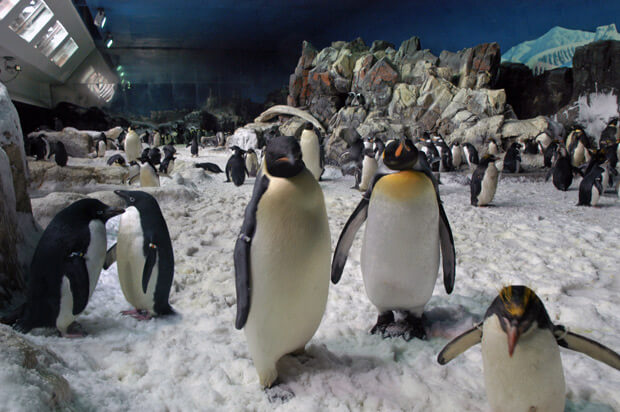 Animal Encounters SeaWorld Penguin VillaDirect Orlando Florida Vacation Rentals