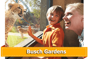 Tickets for Busch Gardens Tampa