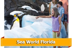 SeaWorld Orlando discount tickets