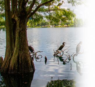 Orlando Nature Parks vacation rentals